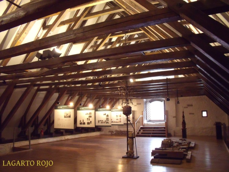 2011-07-05 018 LAGARTO ROJO