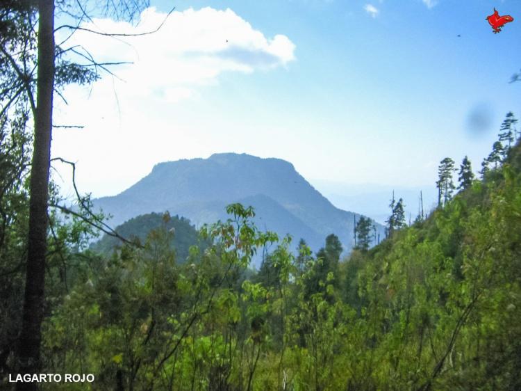 Cerro Capulín
