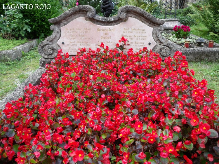 Una de las muchas tumbas cubiertas de flores del cementerio de San Pedro