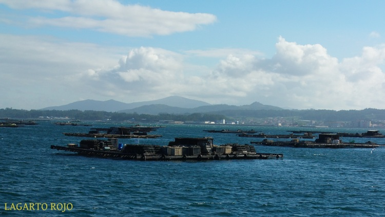 Preciosa imagen de las bateas con el accidentado relieve la costa pontevedresa de la ría; también se aprecia la localidad de Cambados
