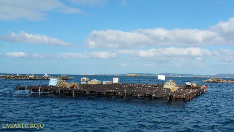 Más bateas. Al fondo, la península de Barbanza, el punto más meridional de la provincia de La Coruña