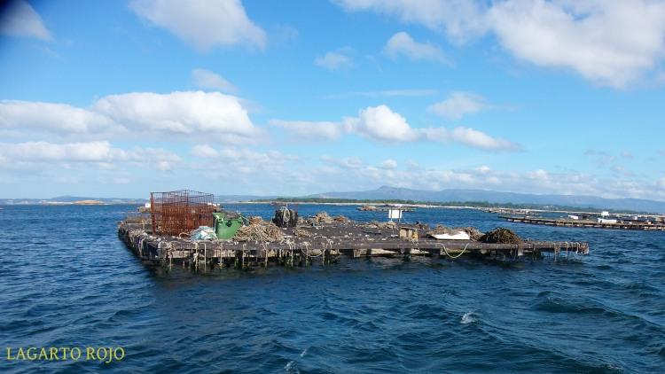 Una batea vista de cerca. Los mariscadores dejan sus aparejos sobre la propia plataforma