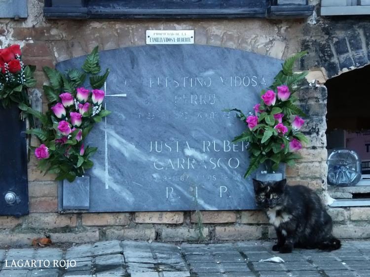 El cementerio está habitado por cientos de felinos