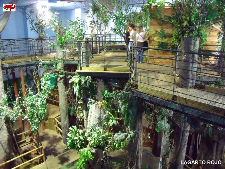 Jungla amazónica
