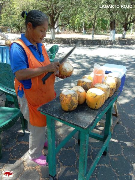 Vendedora de cocos