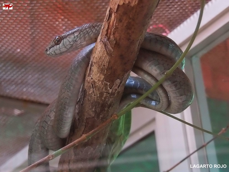 Serpiente de Costa Rica