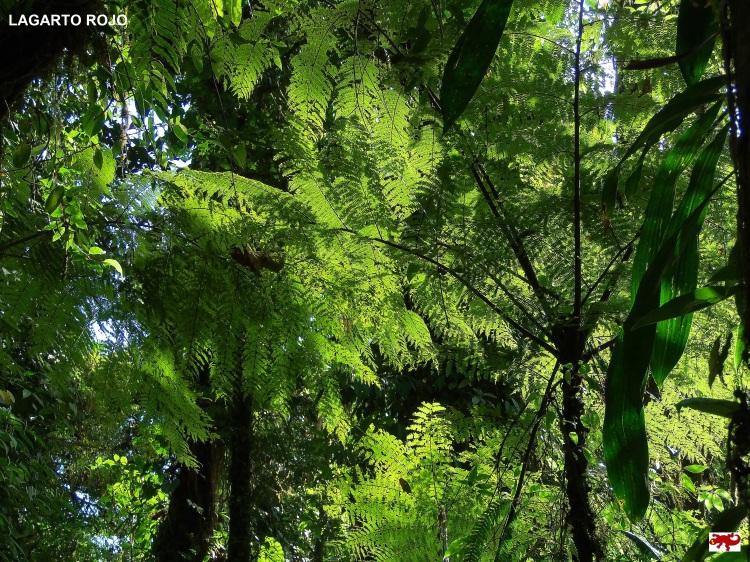 Bosque lluvioso de Monteverde