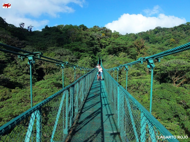 Puentes colgantes de Monteverde