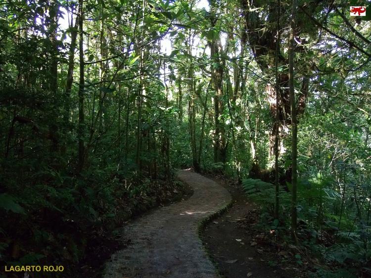 Bosque nuboso de Monteverde