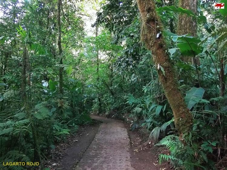 Bosque nuboso Monteverde