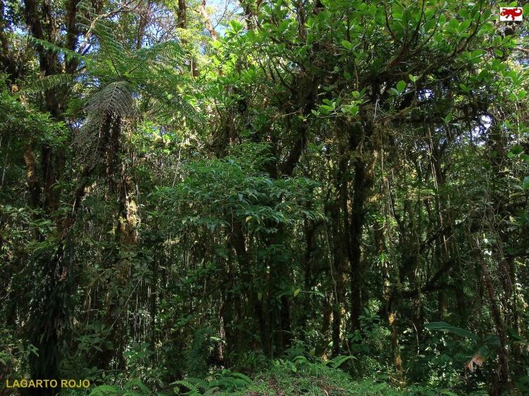 Bosque Eterno de los Niños