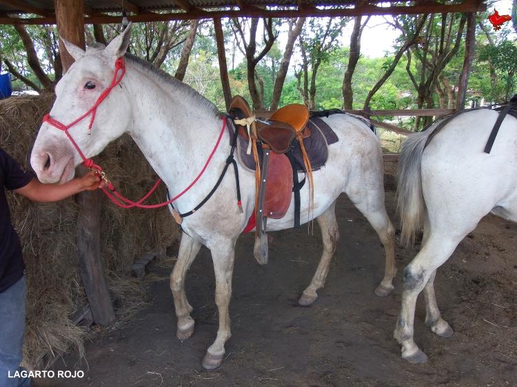 Equitación en Costa Rica