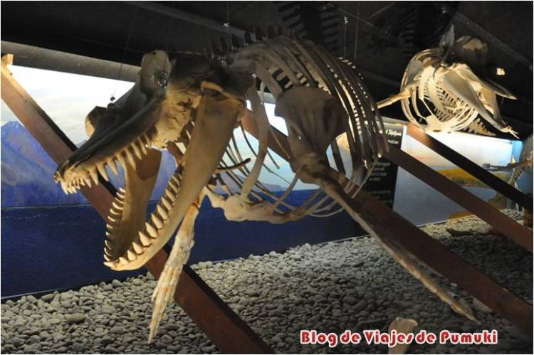 Islandia-Husavik-museo-ballenas