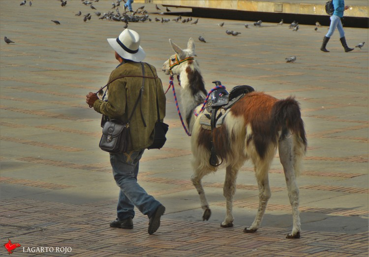 dsc_1078-imagenes-de-colombia
